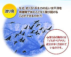 渡り鳥のパワーをイミダペプチドで
